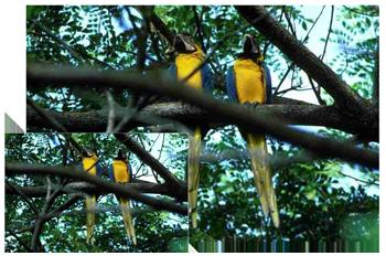 Filma och fotografera fåglar med en Raynox telelins