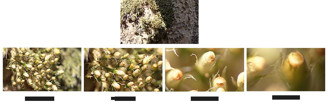 Raynox linser för makrofoto, Diopterexempel