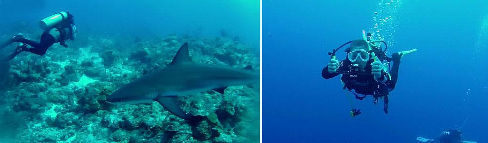 Vänster: I karibiska havet finns chansen att man träffar på hajar. Höger: På en Veho MUVI dykrigg kan en eller flera kameror eller belysningar monteras. Den underlättar dessutom under dyket då den ger stabilitet och ett stadigt grepp.